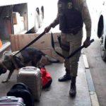 Barreiras: Rondesp realiza operação com cães farejadores