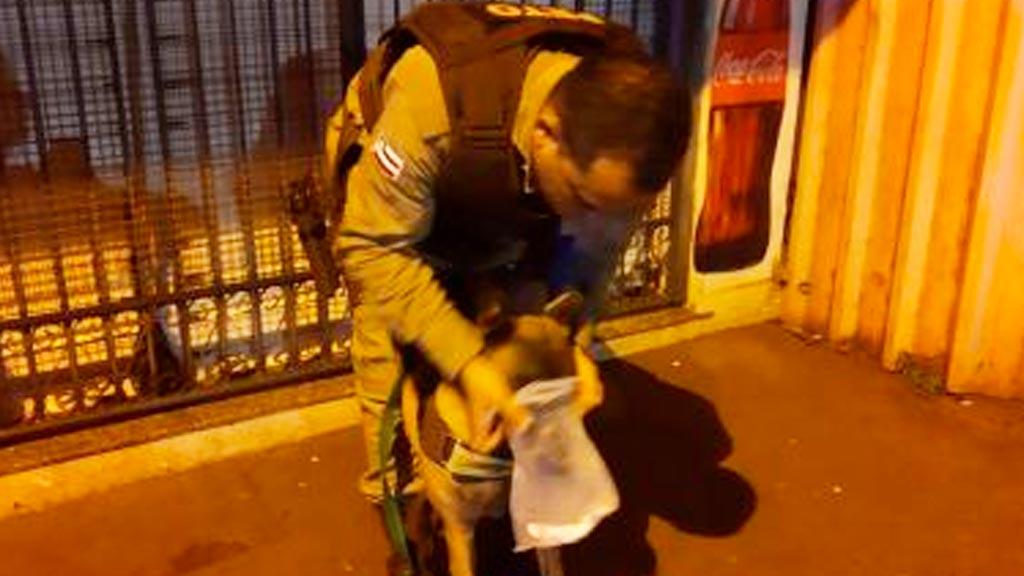 Cadela treinada ajuda policiais a localizar acusado de homicídio em Valença – BA