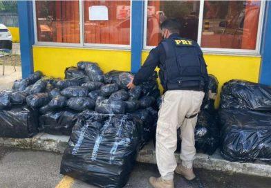 Mais de 260 kg de maconha são encontrados em caminhonete após perseguição policial na Bahia